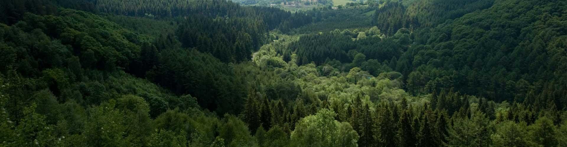 Les Douglas exploités par la scierie Eurodouglas proviennent du Morvan en Bourgogne (photo du Morvan avec des Douglas visibles)